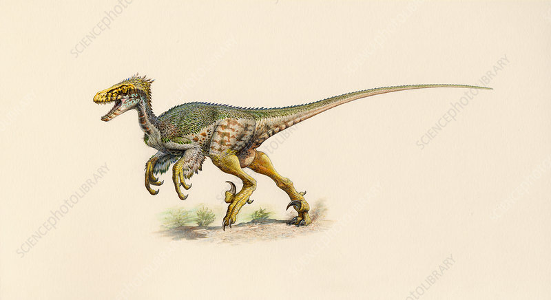 Feathered Dromaeosaurus dinosaur, illustration
