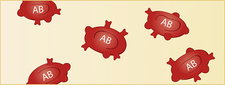 Type AB red blood cells, illustration