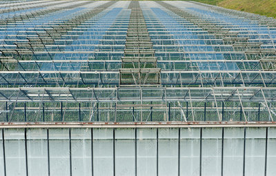 Commercial greenhouses, Netherlands