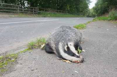 Roadkill, UK