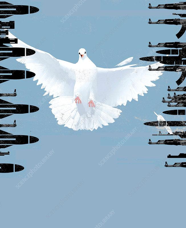Peace dove, conceptual image