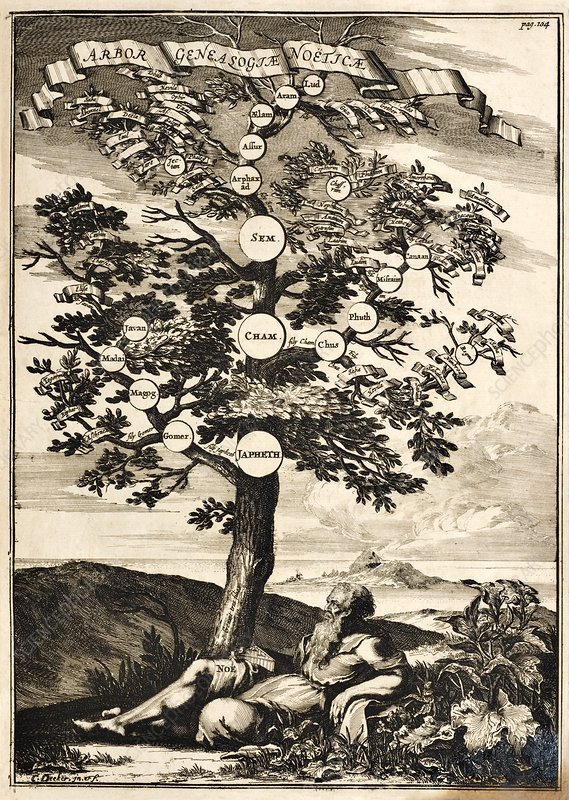 Noah's family tree, 17th-century illustration