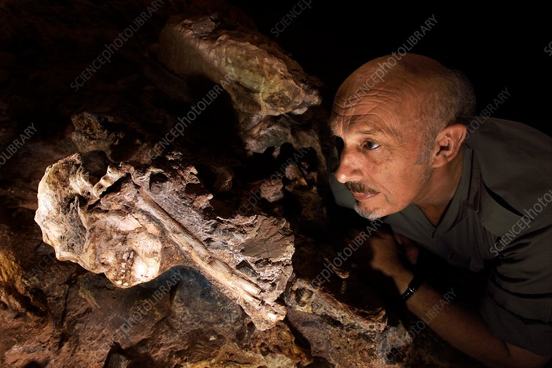 Ronald Clark with Little Foot Australopithecus fossil