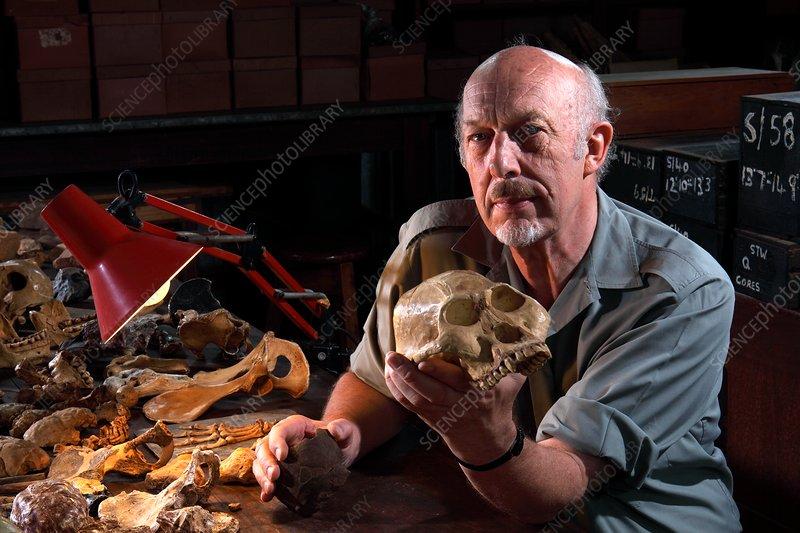 Ronald J. Clark with Australopithecus fossil skull cast