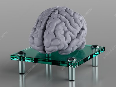 Human brain on glass support, illustration