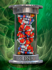 Z-DNA, illustration