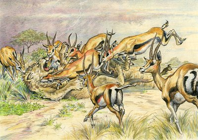 Gazelles attacking a lion, illustration