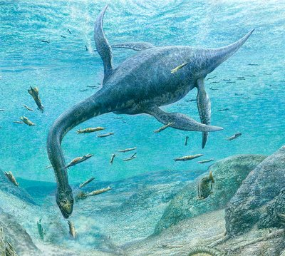Plesiosaur feeding, artwork