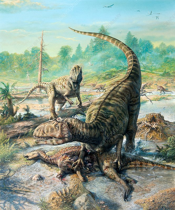 Allosaurus dinosaur with its prey, illustration
