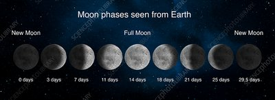 Phases of the Moon, illustration