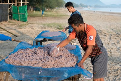 Thai fishermen with krill catch