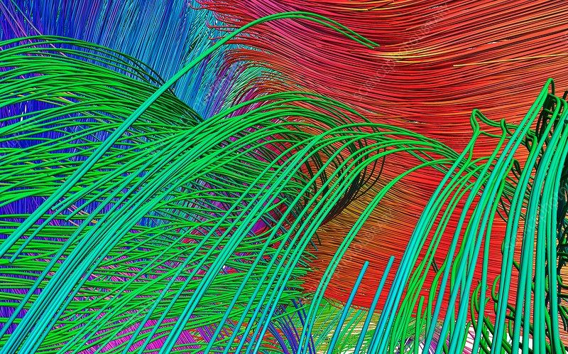 Brain fibres from cingulum, DTI scan