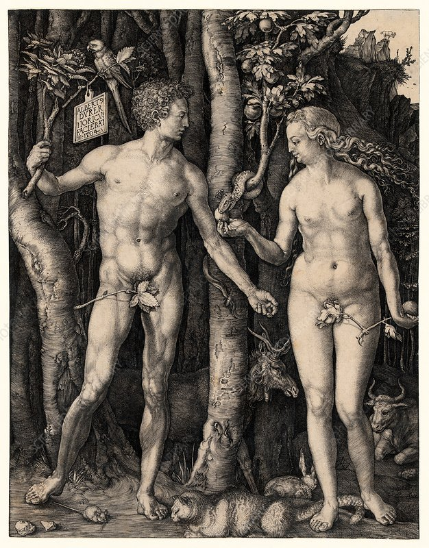 Albrecht Durer's 'Adam and Eve', 1504