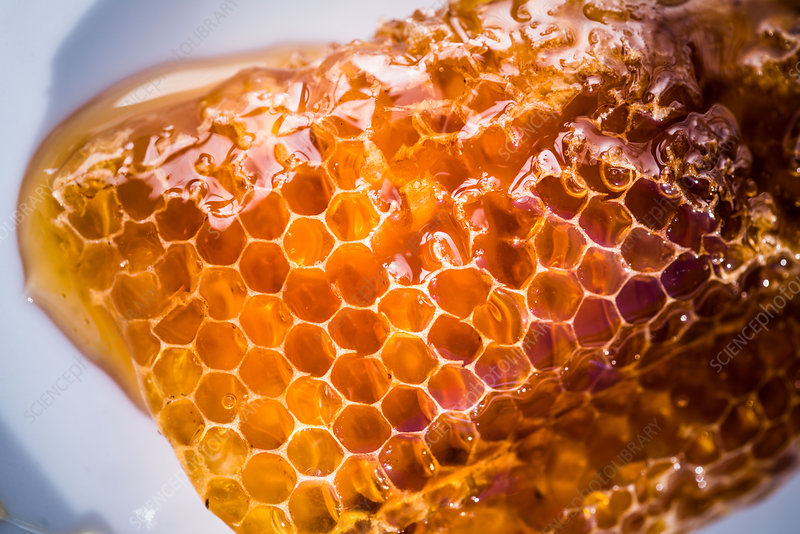 Cells of honeycomb