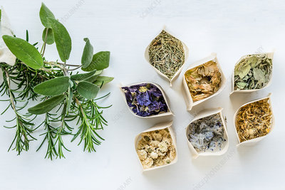 Assortment of dried plants and aromatic herbs