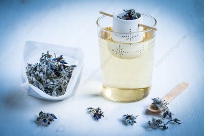 Tea of borage (Borago officinalis)