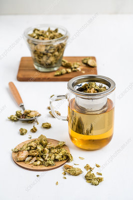 Dried hops (Humulus lupulus) tea
