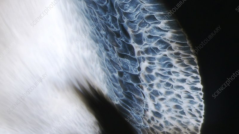 Dynamic liquid flow patterns, light micrograph