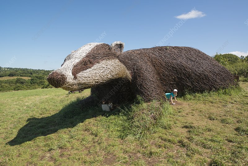 Large badger willow sculpture