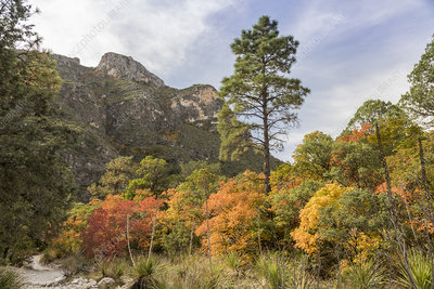 Guadalupe Mountains National Park, Texas, USA