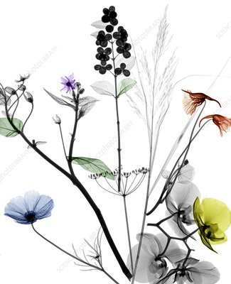 Assorted flowers, X-ray