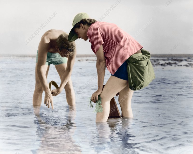 Rachel Carson undertaking marine research