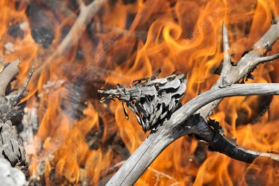 Close-up of a forest fire