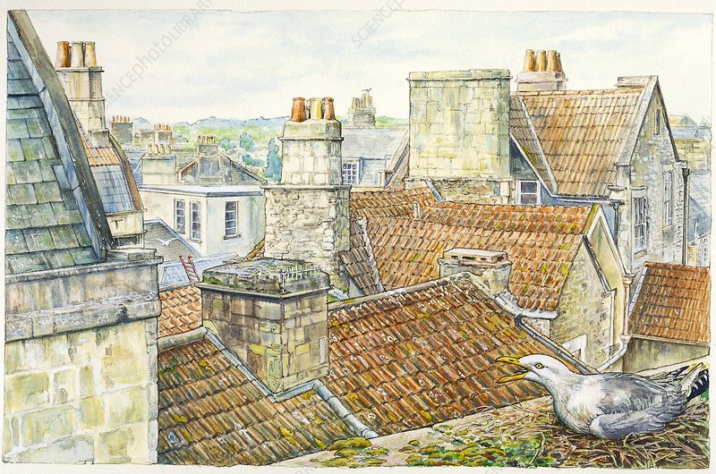 Seagull nesting on a rooftop, illustration