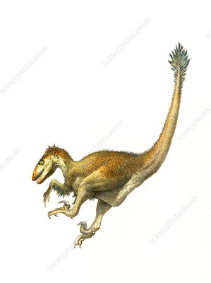 Deinonychus dinosaur, illustration