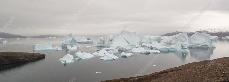 Icebergs in pinch point of Rode Fjord, Greenland