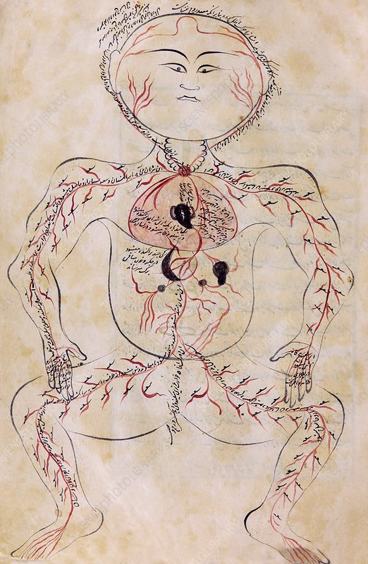 Mansur's Anatomy, 15th century
