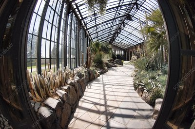 Glasshouse of tropical plants