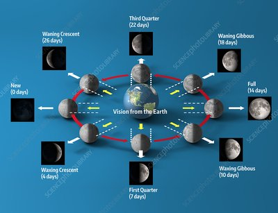 Lunar cycle, illustration