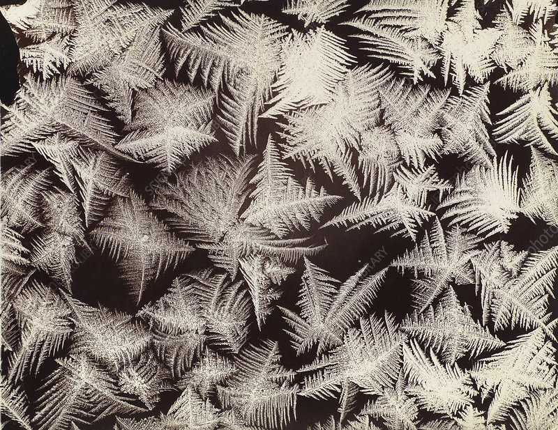 Frost patterns, photographed by Wilson Bentley