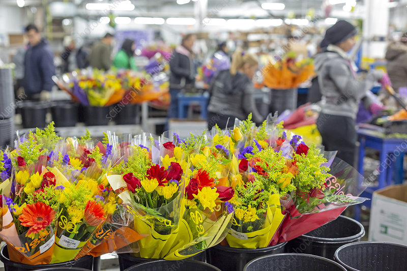 Imported Flower Warehouse Usa Stock Image C0387757 Science