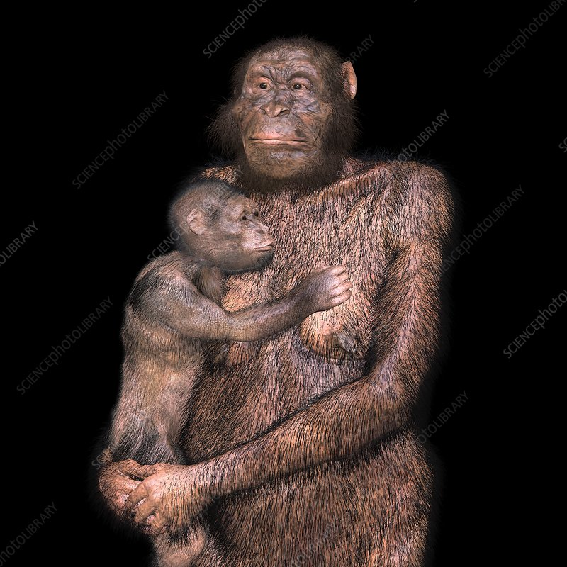 Australopithecus sediba female and infant, illustration