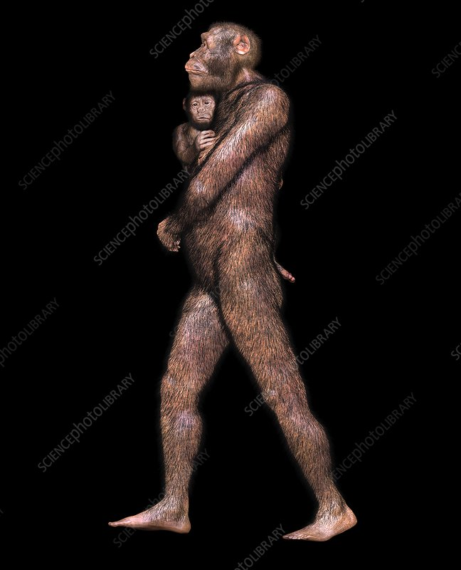 Australopithecus sediba female and infant, illustration