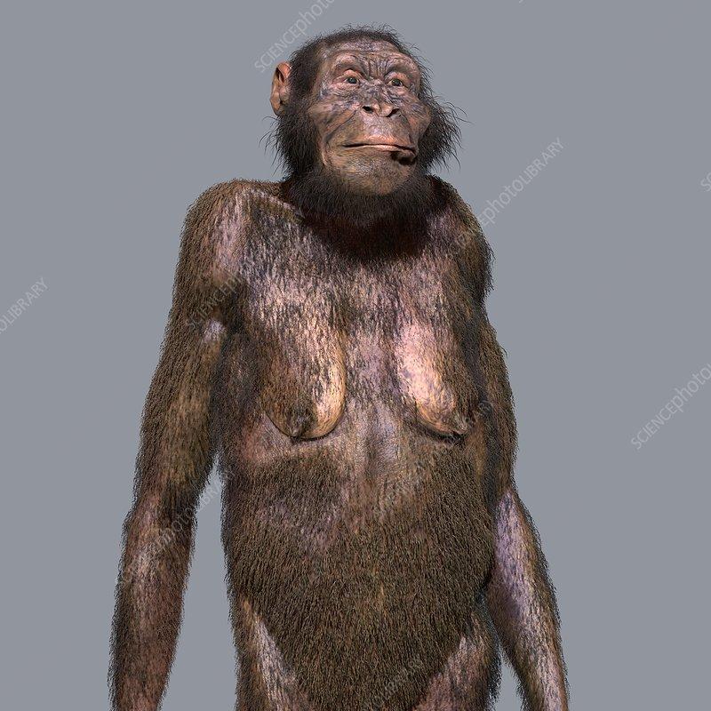 Australopithecus sediba female, illustration