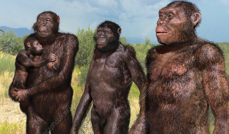 Australopithecus sediba family group, illustration