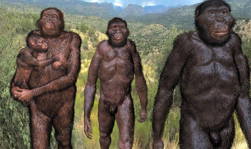 Australopithecus sediba family group, illustration