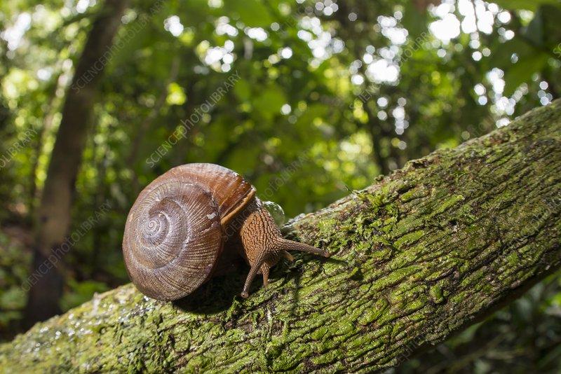 Snail on branch