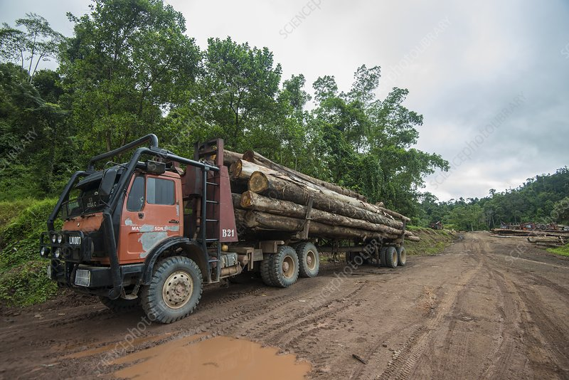 Logging in Imbak Canyon Conservation Area, Borneo
