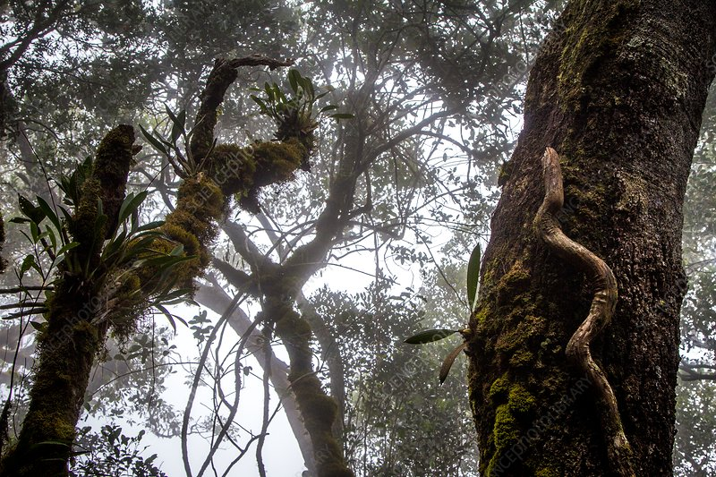 Cloud forest, Borneo
