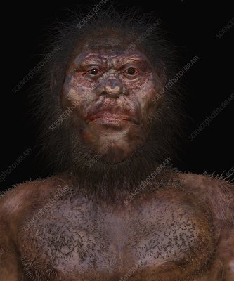 Homo naledi male, illustration