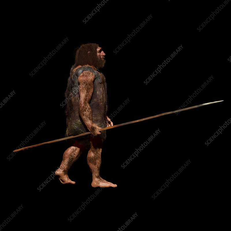 Neanderthal hunter, illustration