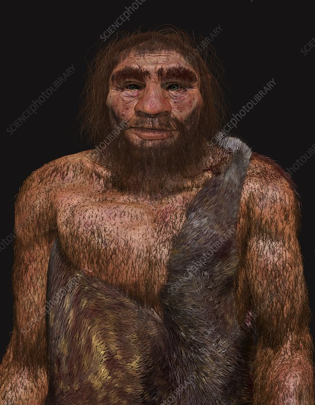 Neanderthal male, illustration