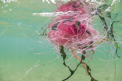 Plastic fishing nets floating in ocean