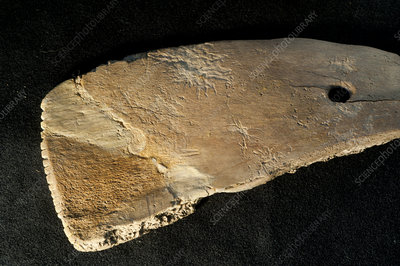 Bone spatula excavated from La Draga Neolithic site