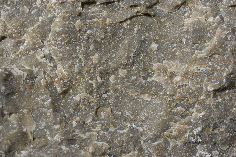 Triassic limestone fracture surface, macrophotograph