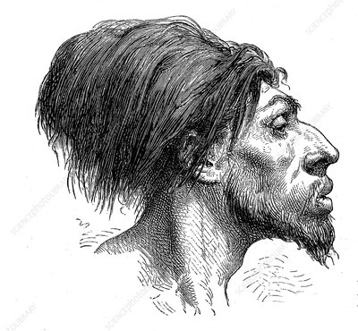 Fossil head reconstruction, 19th century